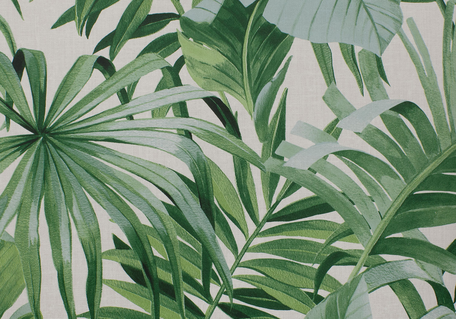 Tropical Plant Aesthetic